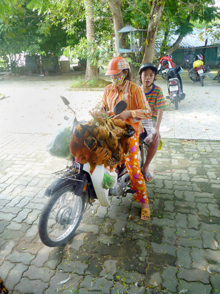 Live chicken transport