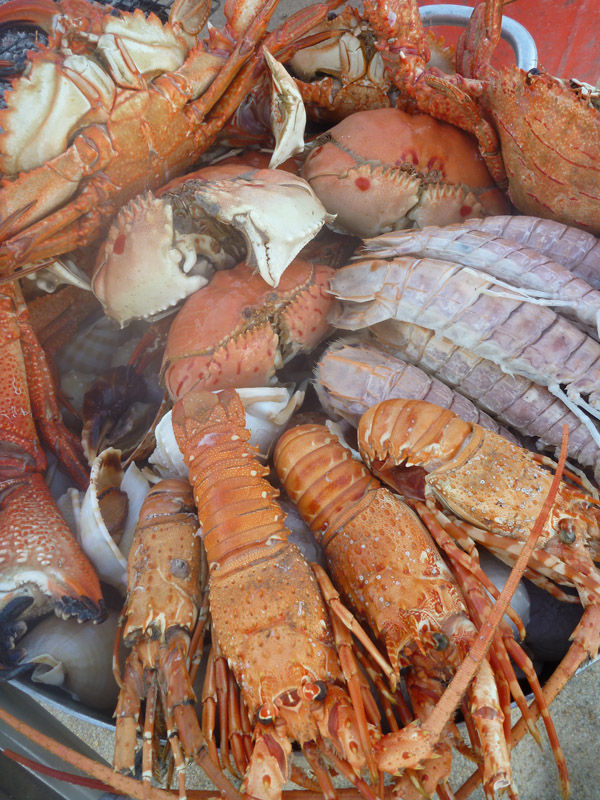 Seafood closeup