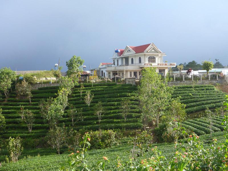 Dalat Tea Fields